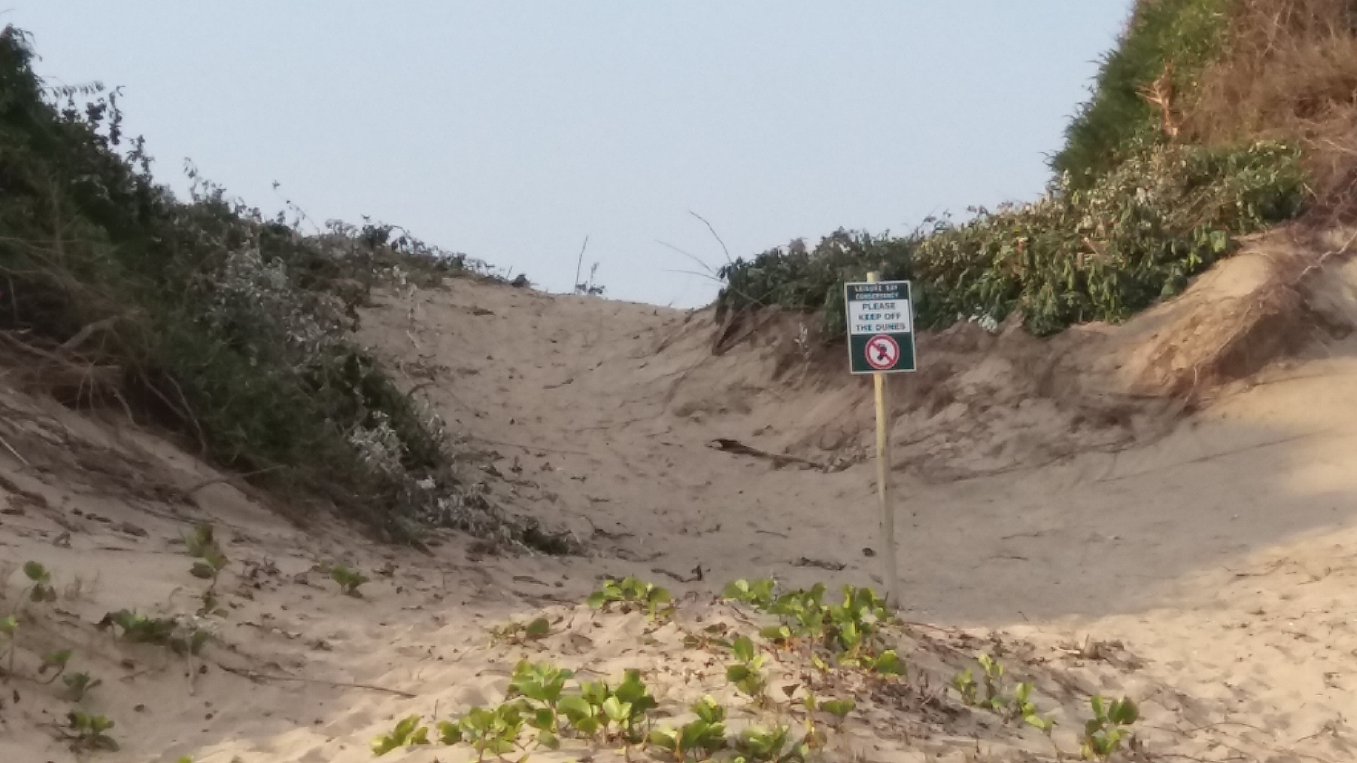 drakes-bay-north-dune-draft-maintenance-management-plan-
