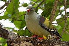 leisure-bay-smaller-birds