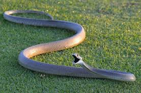 leisure-bay-snakes